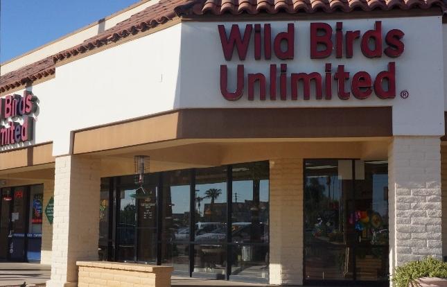 Paloma de alas blancas - Whatbird.com